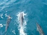 Kauaii 2011-Day5 (17)
